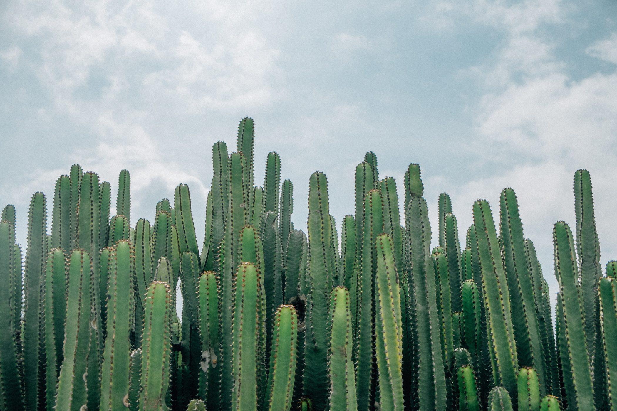 Cactus Spiritual Symbolism: Survive and Thrive Blog Image