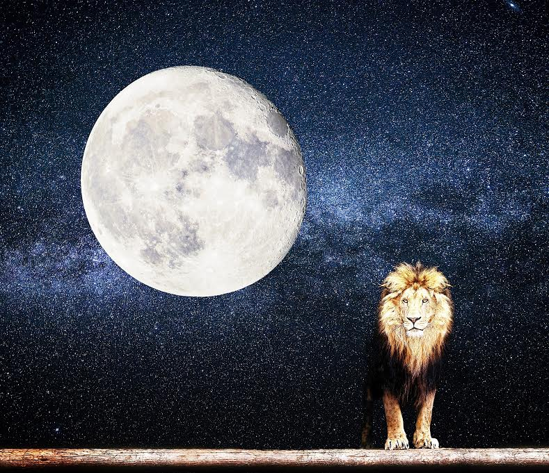 Get Ready to Roar: August's Powerful Lion Moon Meaning