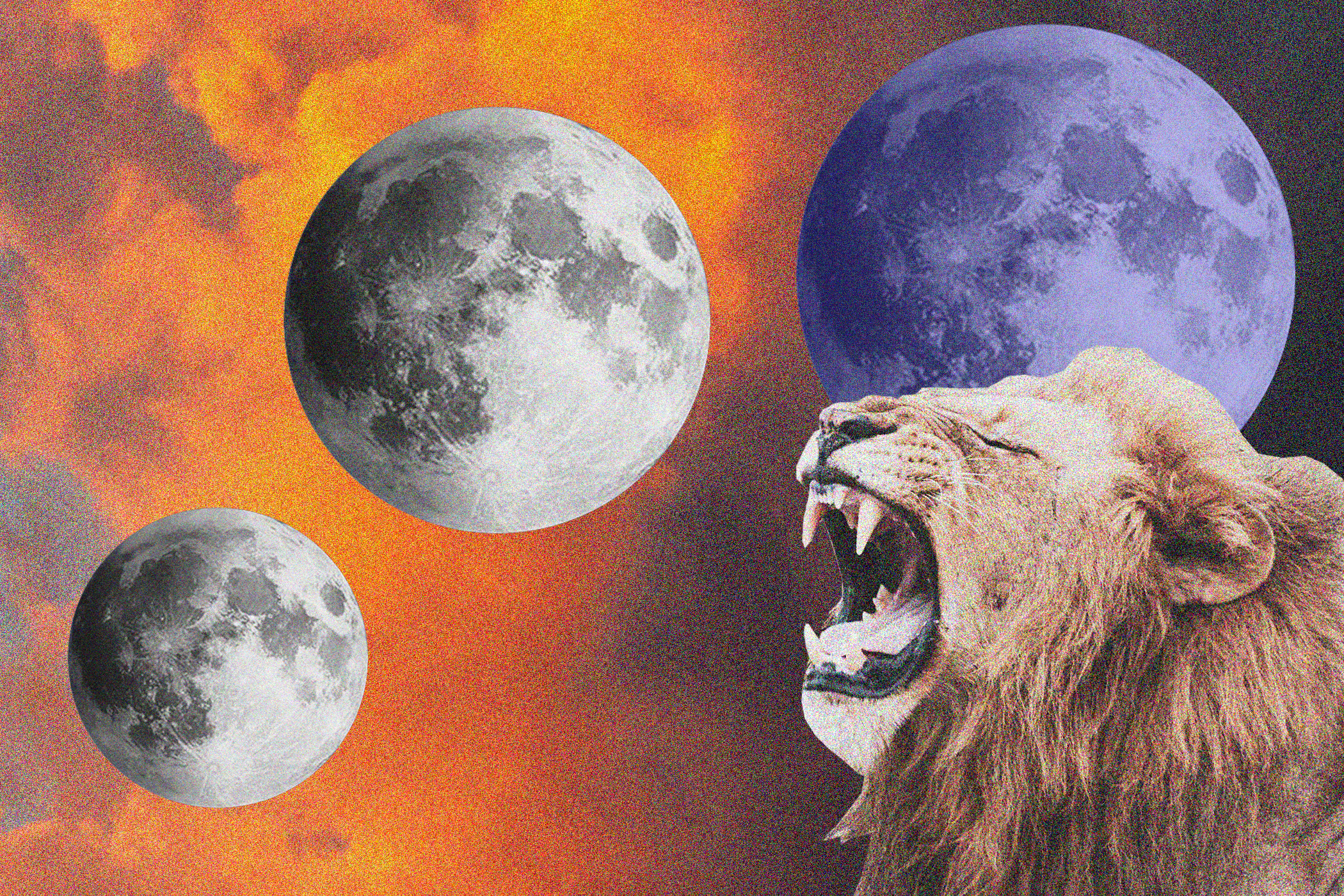 Lion roaring at two blue moons with a red and orange cloudy sky in the background.